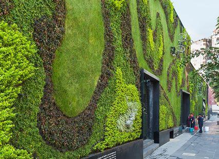 mur végétal : zoom sur l'Inventeur du gazon en rouleaux