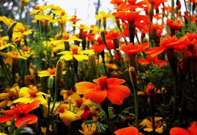 Jardinières écologiques en matériaux de récupération